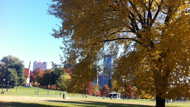 Boston Common, M.Nayer